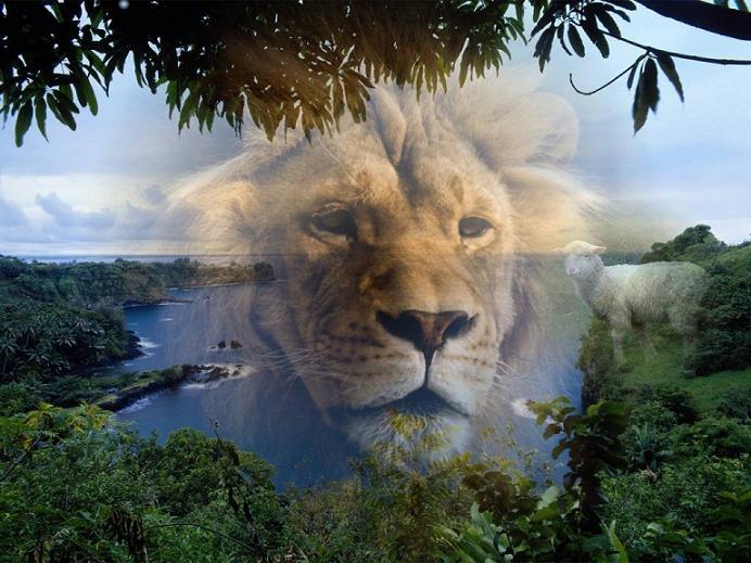 1llx_lionforrest